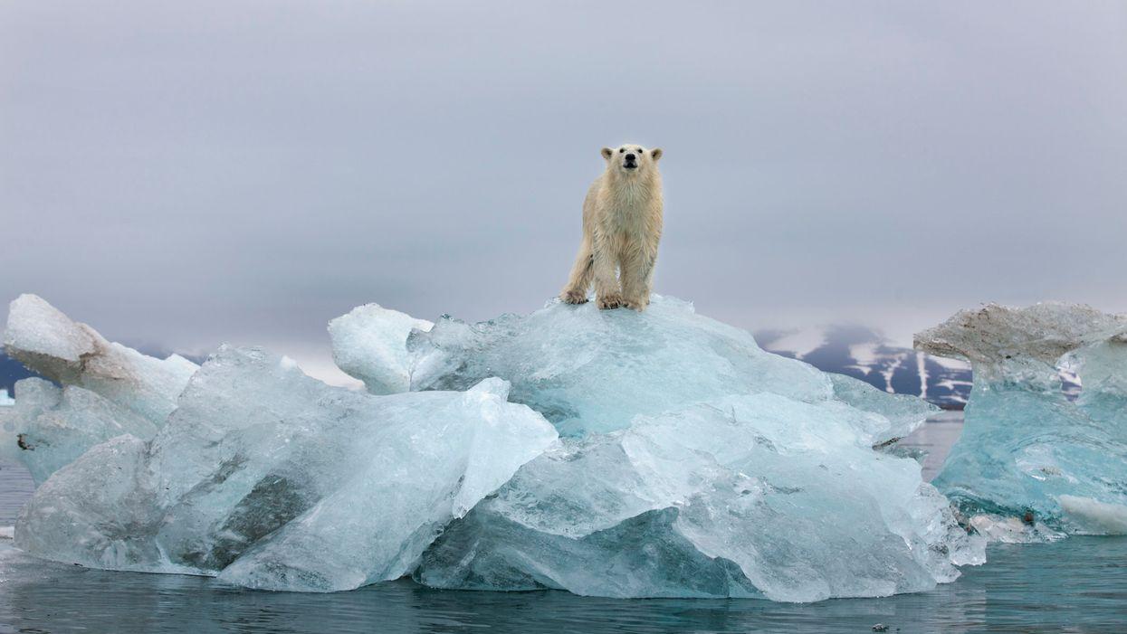 A polar bear on top of a melting glacier