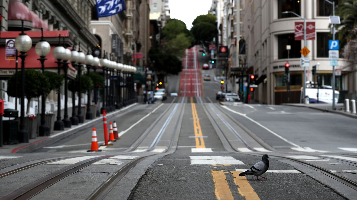 A pigeon crosses Powell Street in San Francisco