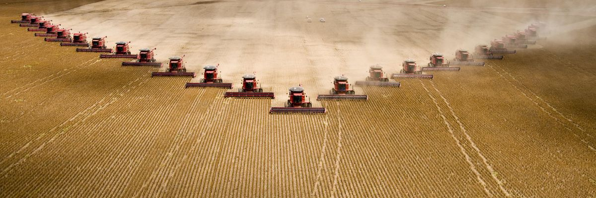Fields of soybeans being harvested