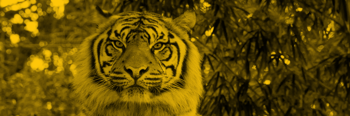 How Tiger Global crashed the VC party